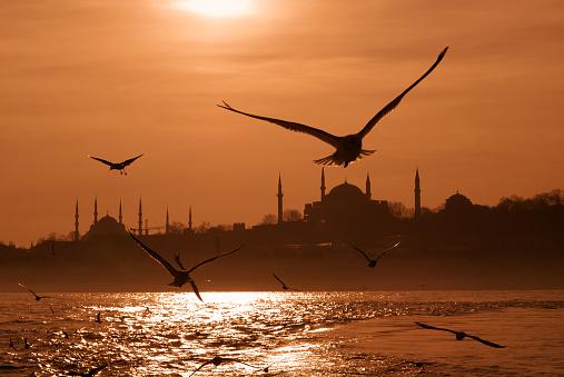 Turkey - Bird「Seagulls flying over a beach in Istanbul at sunrise」:スマホ壁紙(3)