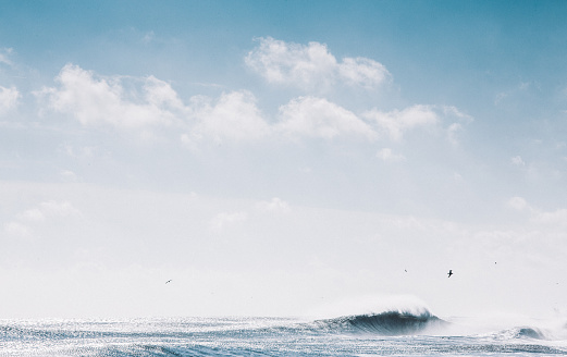 カッコいい「Seagulls flying over ocean」:スマホ壁紙(4)