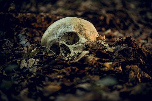 自生「Skull」:スマホ壁紙(18)
