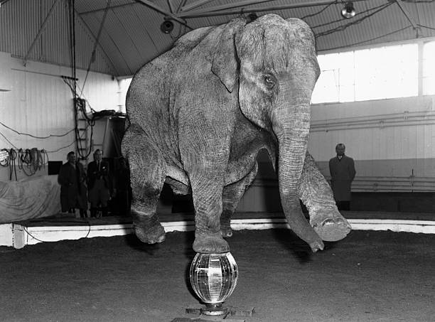 Balanced Elephant:ニュース(壁紙.com)