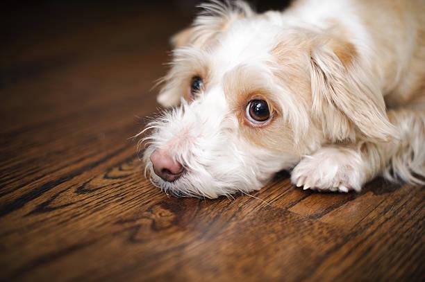 Really Sad Dog:スマホ壁紙(壁紙.com)