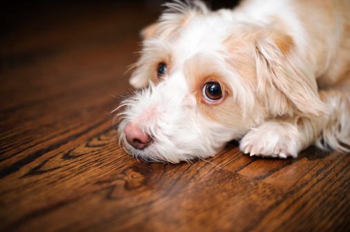 Mixed-Breed Dog「Really Sad Dog」:スマホ壁紙(15)