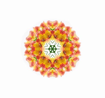 Alstroemeria「Alstomeria Flower Mandala」:スマホ壁紙(14)