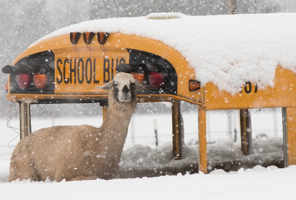 School Bus「Late Winter Snowstorm Hits Washington DC」:写真・画像(2)[壁紙.com]