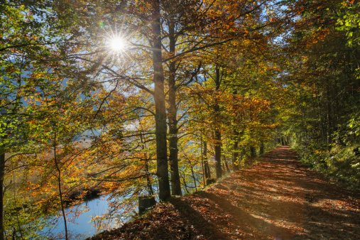 Salzkammergut「Austria, Upper Austria, View of beech forest at Offensee Lake」:スマホ壁紙(15)