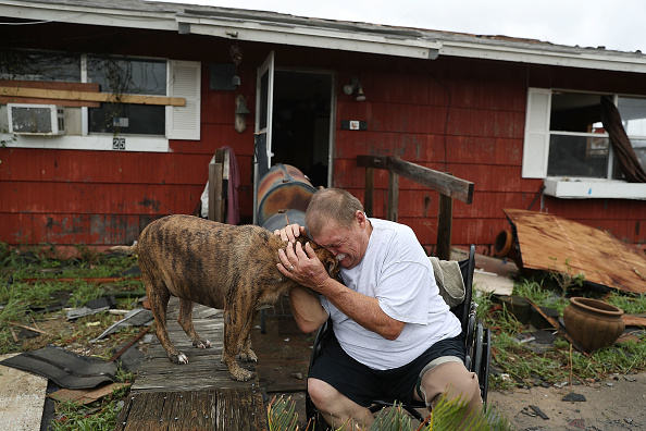 犬「Hurricane Harvey Slams Into Texas Gulf Coast」:写真・画像(16)[壁紙.com]