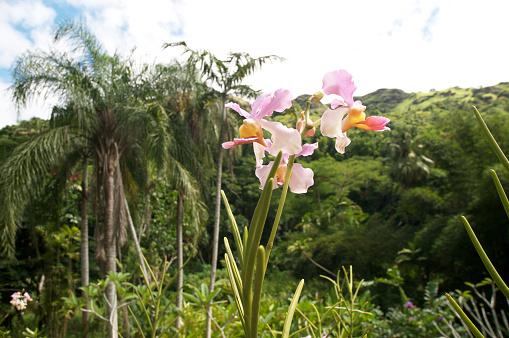 flower「Orchids, Botanical Garden, Fiji」:スマホ壁紙(12)