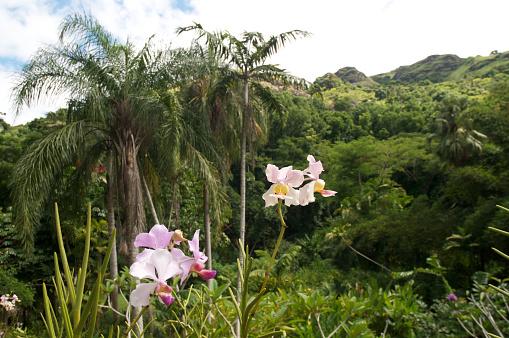 flower「Orchids, Botanical Garden, Fiji」:スマホ壁紙(13)
