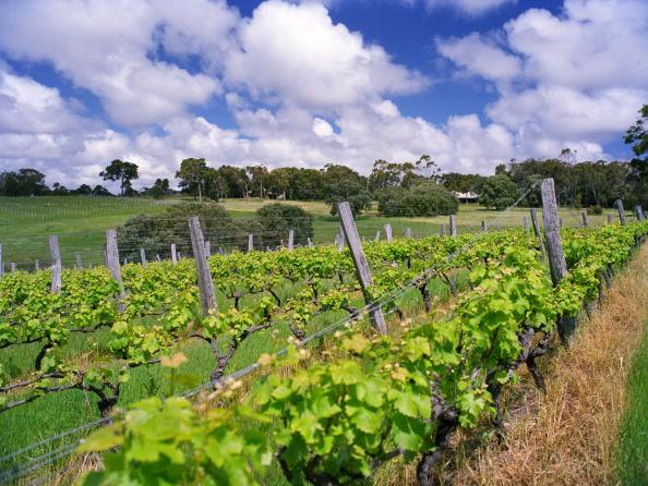 Tom Stoddart Archive「Margaret River Vineyards」:写真・画像(19)[壁紙.com]
