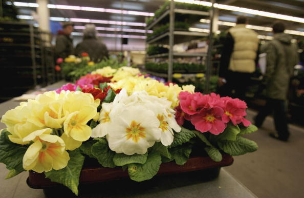 Flower Shop「Consumers Enjoy Spring Flowers」:写真・画像(7)[壁紙.com]