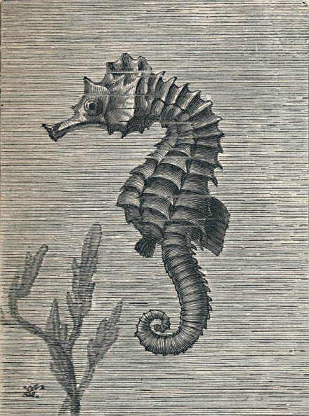 魚・熱帯魚「'The Sea-Horse, Undisguised, Sedately Swimming', c1900, (1910)」:写真・画像(15)[壁紙.com]
