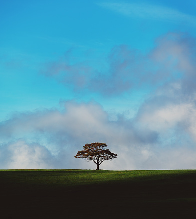 Single Tree「Lone Tree Hill」:スマホ壁紙(1)