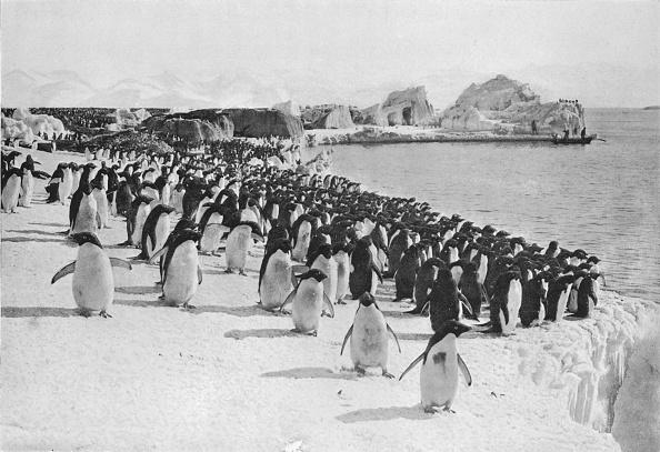 Ski Pole「Penguins Promenade」:写真・画像(17)[壁紙.com]