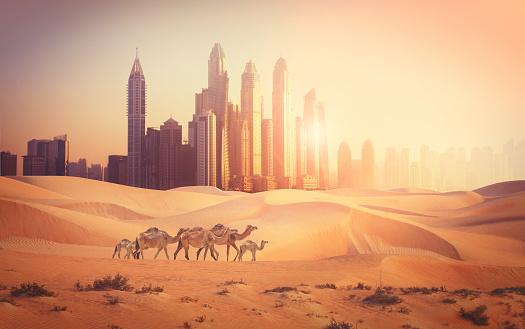 Downtown District「Dubai city in the desert」:スマホ壁紙(3)