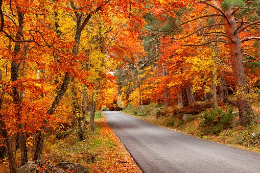 Empty Road「Spain, Zaragoza, Autmn in Dehesa del Moncayo Natural Park」:スマホ壁紙(16)
