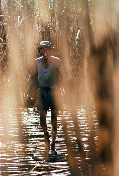 イネ科「Australian Sugar Cane」:写真・画像(0)[壁紙.com]