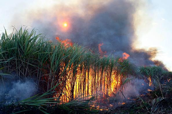 Florida - US State「Florida Acquires U.S. Sugar Land As Part Of Everglades Restoration」:写真・画像(18)[壁紙.com]