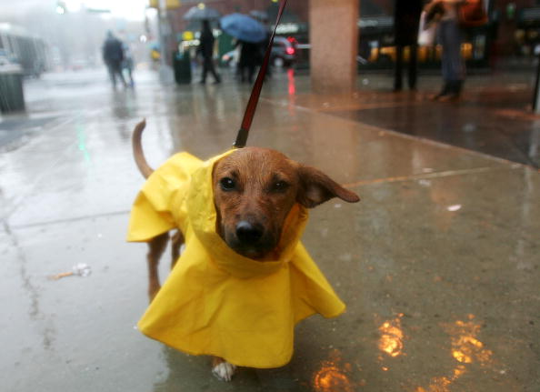Raincoat「Nor'Easter Bears Down On East Coast」:写真・画像(0)[壁紙.com]