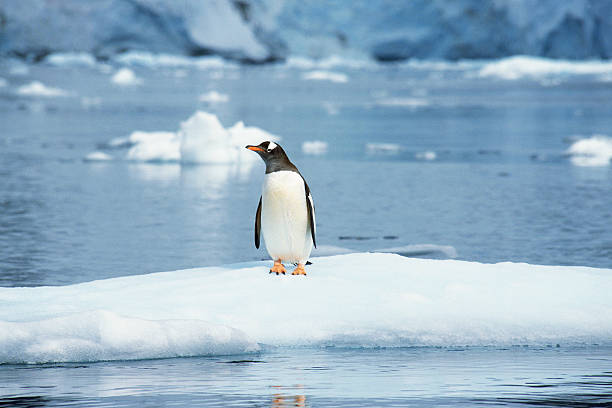 Penguin:スマホ壁紙(壁紙.com)