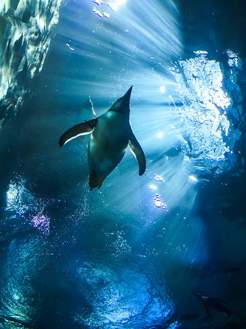 Animal Wildlife「Penguin」:スマホ壁紙(10)
