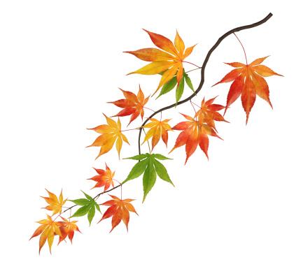 紅葉「カラフルな曲線の秋のブランチ」:スマホ壁紙(7)
