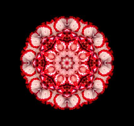 カーネーション「Carnation flower mandala」:スマホ壁紙(19)