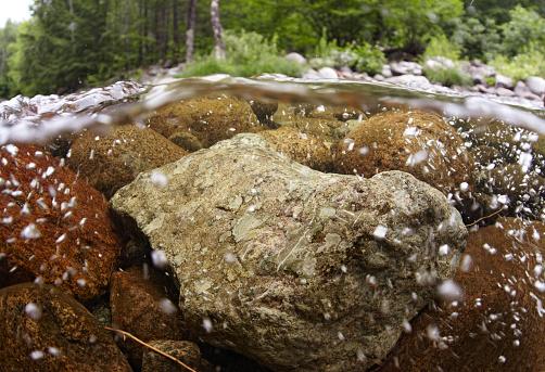 アディロンダック森林保護区「Adirondack Underwater Riverscape」:スマホ壁紙(17)