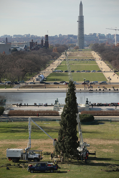 Side Lit「U.S. Capitol Christmas Tree Arrives In Washington」:写真・画像(1)[壁紙.com]