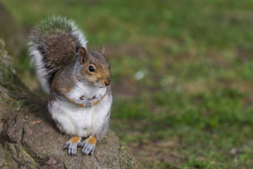Gray Squirrel「Grey Squirrel at the bottom of a tree.」:スマホ壁紙(10)