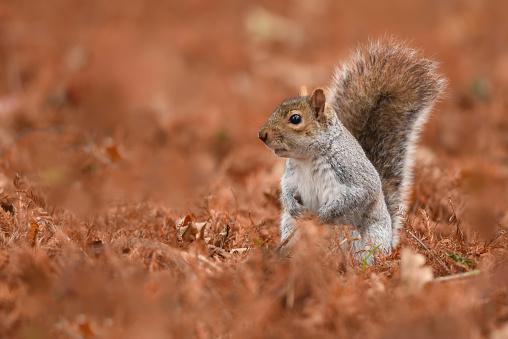 Gray Squirrel「A Grey Squirrel」:スマホ壁紙(14)