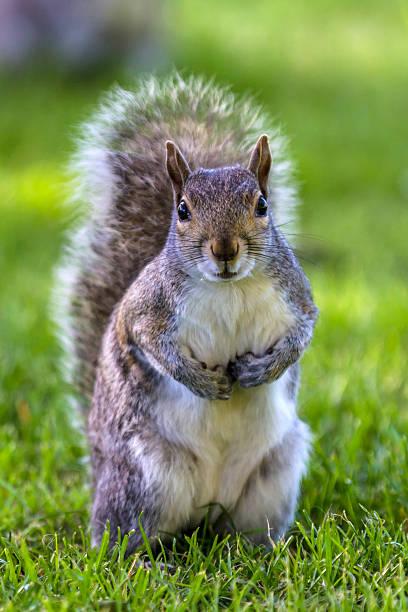 Grey squirrel at a bottom of a tree:スマホ壁紙(壁紙.com)