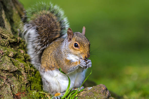 Grey squirrel at bottom of a tree:スマホ壁紙(壁紙.com)