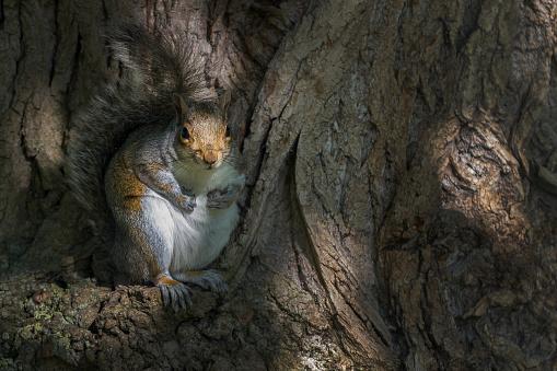 Gray Squirrel「Grey Squirrel」:スマホ壁紙(13)