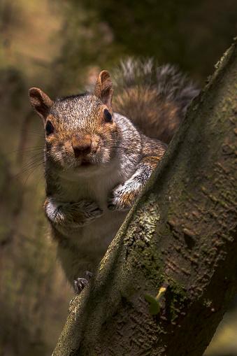 Gray Squirrel「Grey Squirrel」:スマホ壁紙(14)