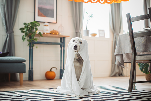 Halloween ghost「Costumed for Halloween」:スマホ壁紙(6)