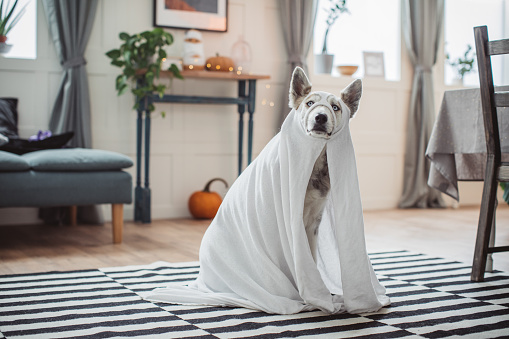 Halloween ghost「Costumed for Halloween」:スマホ壁紙(3)