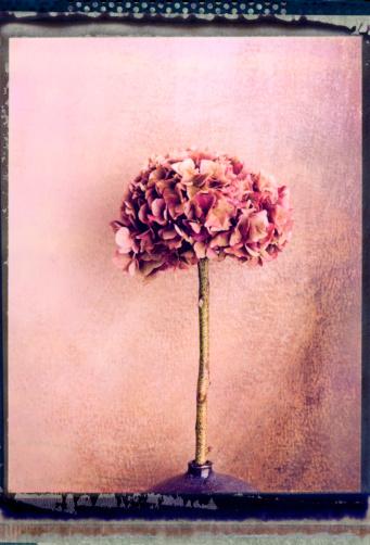 あじさい「Hydrangea flower」:スマホ壁紙(7)