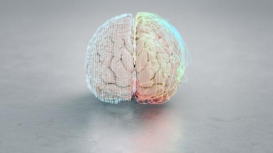 Neuroscience「Left and right brain hemisphere」:スマホ壁紙(4)