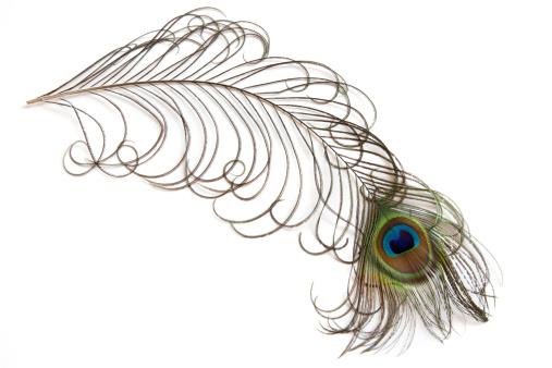 鳥「ピーコックの羽」:スマホ壁紙(6)
