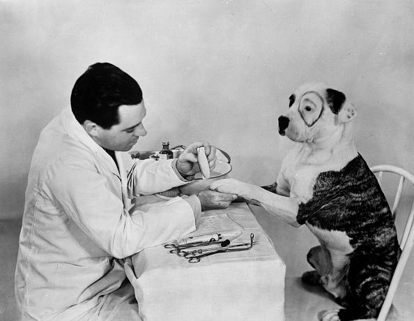 animal「Pete The Pup」:写真・画像(5)[壁紙.com]