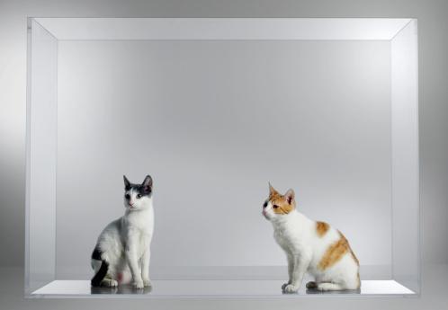 Looking Away「cat」:スマホ壁紙(15)