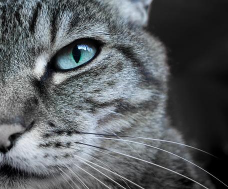 Eyesight「Cat」:スマホ壁紙(6)