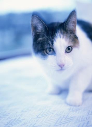 Mixed-Breed Cat「Cat」:スマホ壁紙(19)