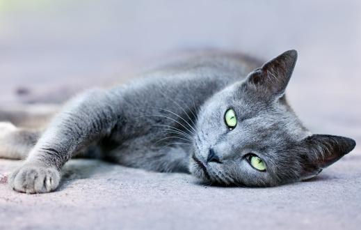 ビルマネコ「Cat」:スマホ壁紙(1)