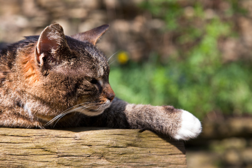 Scratching Post「cat」:スマホ壁紙(13)