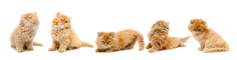 Kitten「cat」:スマホ壁紙(17)