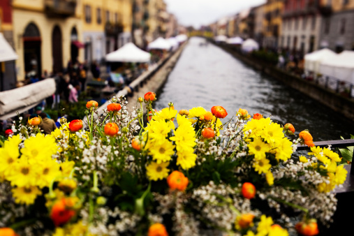 Agricultural Fair「Flower Market - Milano. Color Image」:スマホ壁紙(14)