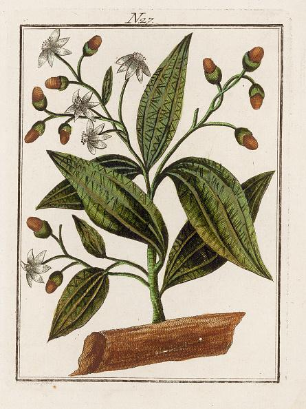 Spice「The Cinnamon. From Die Welt In Bildern. Band 3. Baumeister. Vienna. 1790.」:写真・画像(2)[壁紙.com]