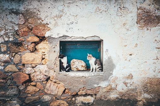 Mixed-Breed Cat「Framed Cats In Milos」:スマホ壁紙(0)