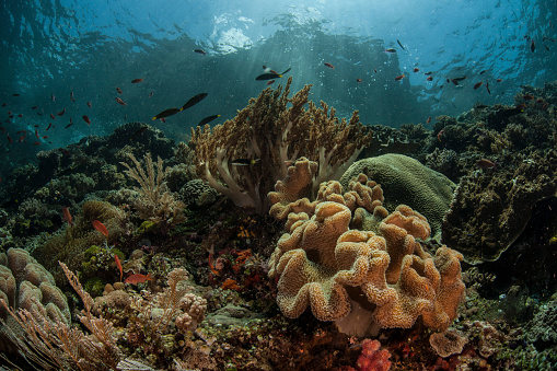 Soft Coral「A beautiful coral reef grows in Komodo National Park, Indonesia.」:スマホ壁紙(5)